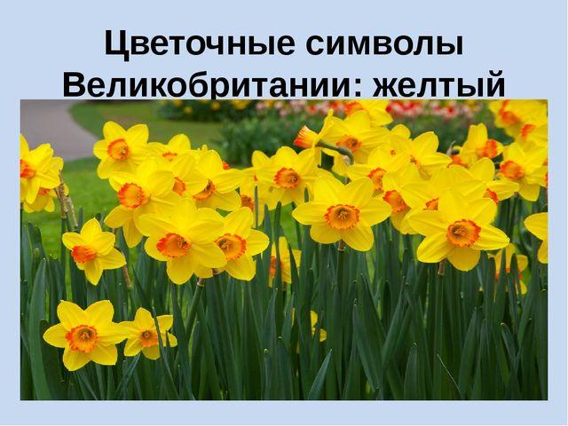 Цветочные символы Великобритании: желтый нарцисс Уэльса