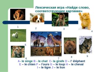 A- le singe B - le chat C- la girafe D – l' éléphant E – le chien F – l'ours
