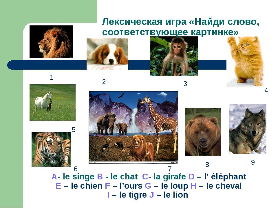 A- le singe B - le chat C- la girafe D – l' éléphant E – le chien F – l'ours...