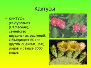 Кактусы КАКТУСЫ (кактусовые) (Cactaceae), семейство двудольных растений. Объе