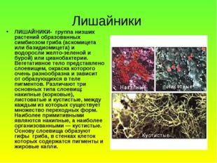 Лишайники ЛИШАЙНИКИ- группа низших растений образованных симбиозом гриба (аск