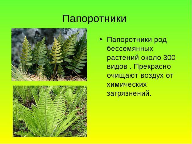 Папоротники Папоротники род бессемянных растений около 300 видов . Прекрасно...