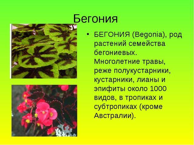 Бегония БЕГОНИЯ (Begonia), род растений семейства бегониевых. Многолетние тра...