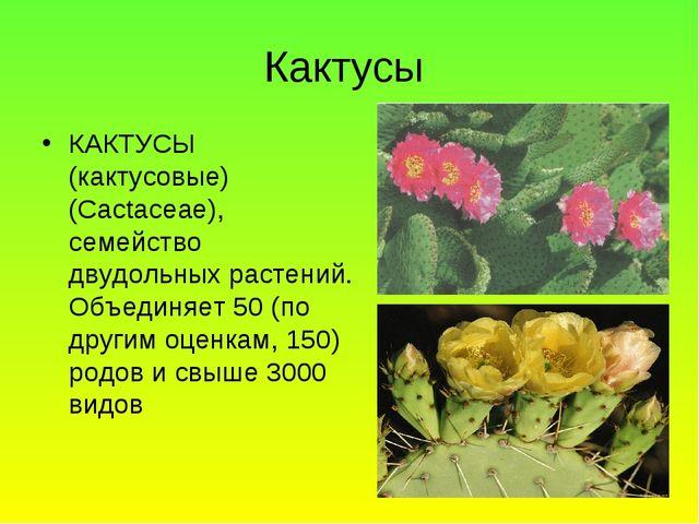 Кактусы КАКТУСЫ (кактусовые) (Cactaceae), семейство двудольных растений. Объе...