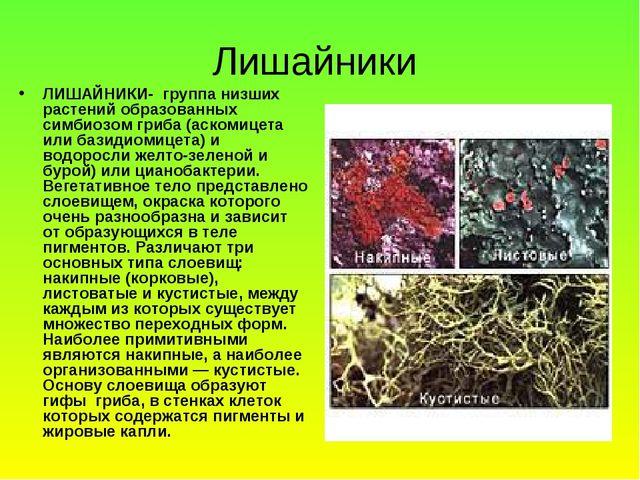 Лишайники ЛИШАЙНИКИ- группа низших растений образованных симбиозом гриба (аск...