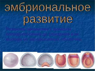 Развитие организма с момента оплодотворения до рождения или выхода из зародыш