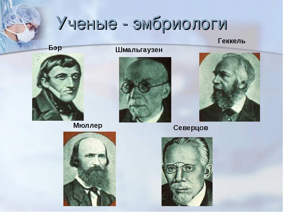 Ученые - эмбриологи Шмальгаузен Бэр Северцов Геккель Мюллер