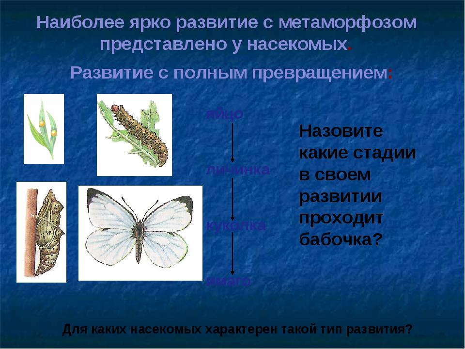 Наиболее ярко развитие с метаморфозом представлено у насекомых. Развитие с по...