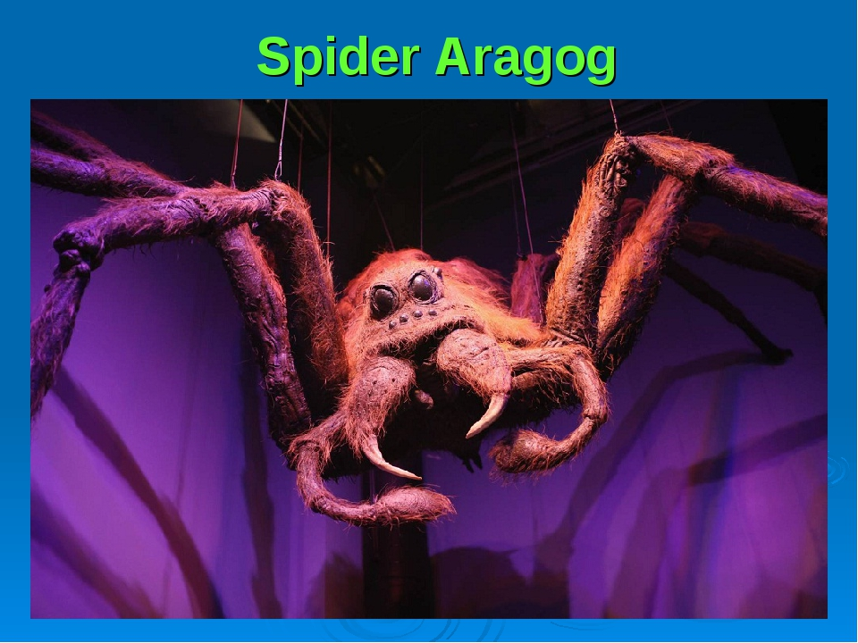Spider Aragog